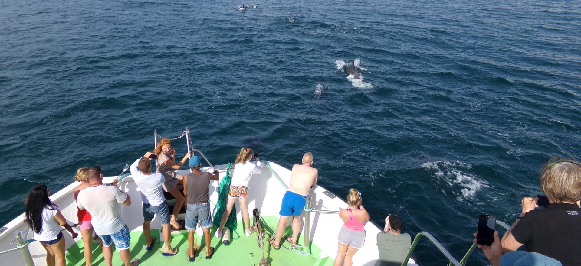 vilamoura dolphins watching trips
